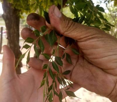 Agroquímicos: realizan inspecciones en los Departamentos Pozo Hondo y Jiménez