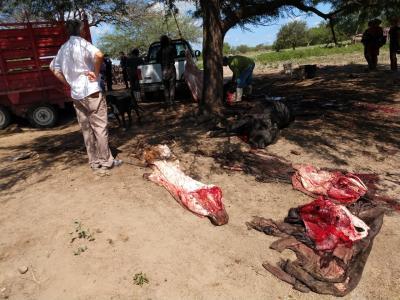 Tras denuncia de vecinos, detectan un matadero clandestino en Vilmer