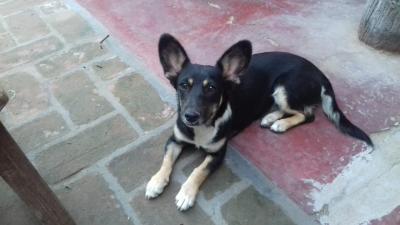 Hermosa perrita de seis meses y castrada, busca familia responsable
