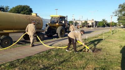 Cuidado del medio ambiente: Continua el plan de arbolado en la «Capital del agro»