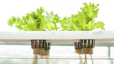 Invitan a participar de un curso virtual sobre «Hidroponia», un método para cultivar plantas en agua
