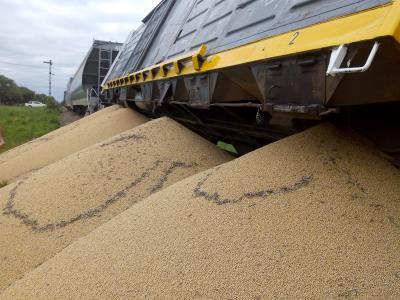 Un total de 12 vagones cargados con soja descarrilaron cerca de Garza
