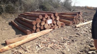 Logran paralizar un desmonte ilegal cerca de la localidad del El Colorado