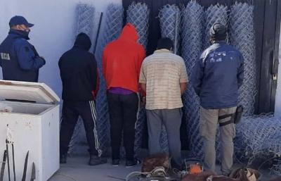 Tras allanamiento, ponen fin a una faena ilegal de vacunos