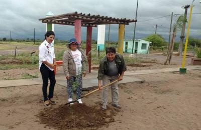Cañada trabaja por el medio ambiente con la colocación de plantas