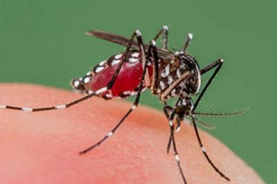 El ministerio de salud confirmó la aparición de casos de dengue