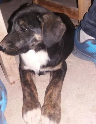 Una tierna cachorrita rescatada de la calle necesita ser adoptada