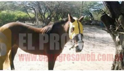 Recuperan en La Banda un yeguarizo que había sido robado en La Colonia
